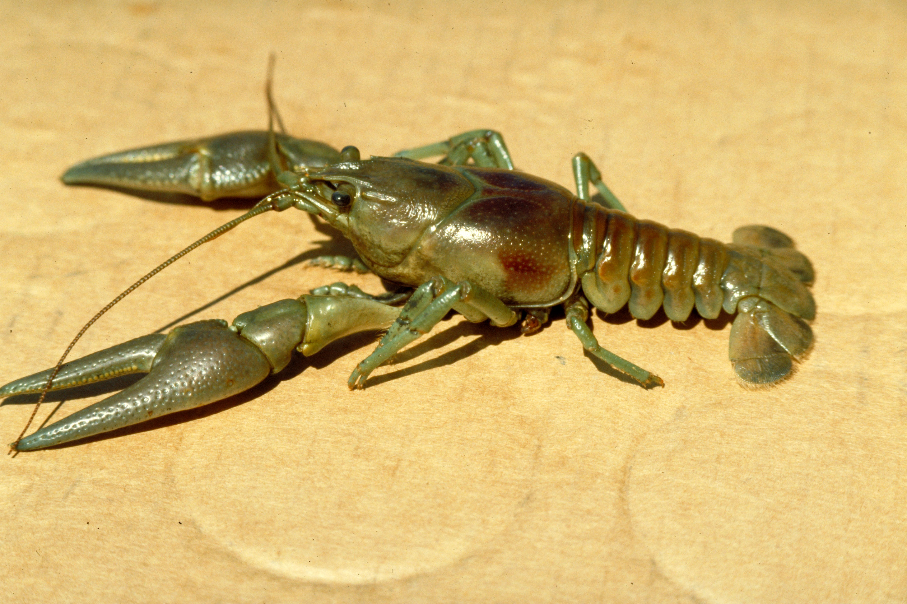 10 invasive species threatening Canadian habitats   CBC News